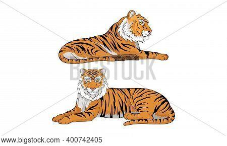 Tiger As Large Cat Specie With Dark Vertical Stripes On Orange-brown Fur Vector Set