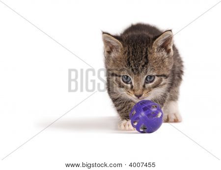 Kitten Playing Ball.