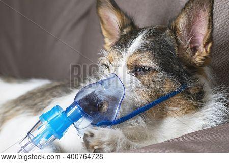 Dog In Oxygen Mask, Animal Pet Diseases, Nebulizer Inhalation. Close-up Photo