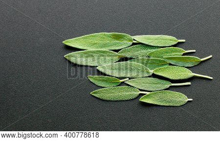 Green Sage On A Black Surface , Sage Leaves Abstract Background, Fresh Natural Color Leaves. Selecti
