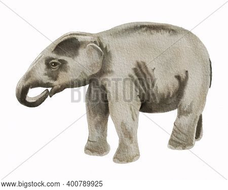 Watercolor Image Of Baby Of Asian Elephant. Realistic Hand Drawn Illustration Isolated On White Back