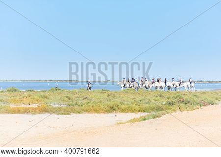 Camargue,france-august 14,2016people With White Horses :strolling In The Park Of The Camargue In Fra
