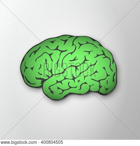 Bright Green Human Brain With Shadow On Grey Background. Healthy Human Brain Lateral View. Awareness