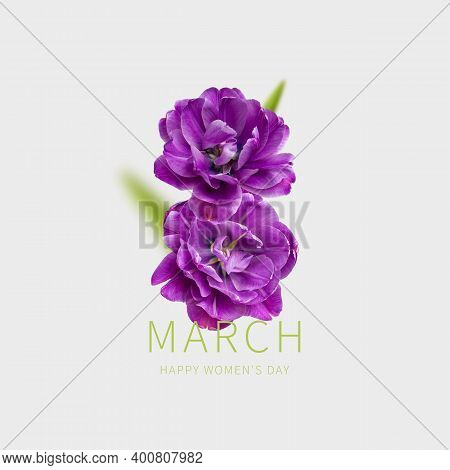 International Womens Day. Creative Concept For March 8 From Purple Tulips. Number Eight From Purple
