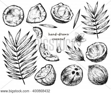 Coconut And Palm Tree Inky Elements Set, Black Sketchy Illustration On White Background
