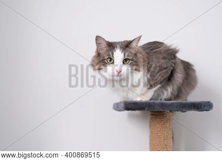 Gray Cat Sits On The Cat's House Against The Background Of A White Wall.