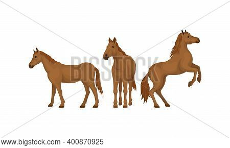 Horse Breed As Domestic Odd-toed Ungulate Mammal Vector Set