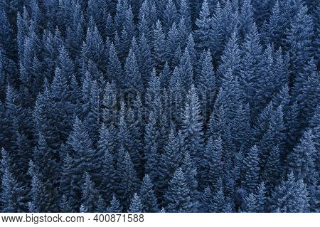 Frosty Forest Background. Seasonal Nature Patterns. Winter Holidays.