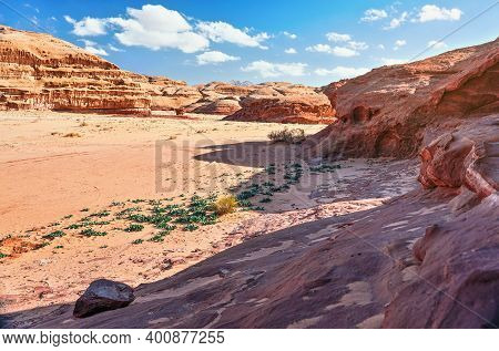 Rocky Formations In Wadi Rum Desert, Bright Sun Shines On Red Dust And Rocks, Sea Squill Plants Drim
