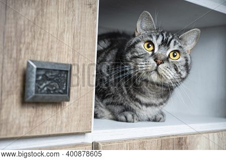 Funny Pets. Funny Cat Looks Out Of The Closet. Cats Love To Hide In Secluded Places. Find A Cat Conc