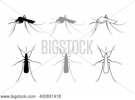Aegypti Mosquito Icon, Gnat Bloodsucking Insect Sign