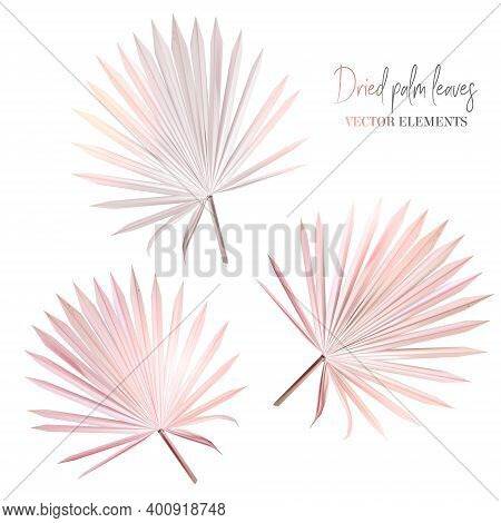 Trendy Dried Tropical Vector Leaves Set. Wedding Blush Pink, Taupe, Neutral, Beige, Brown, Dusty Col