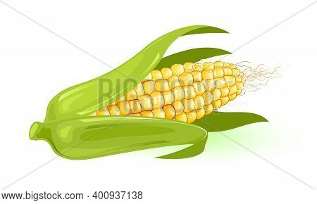 Yellow Corn Wrapped In Green Leaves. Vector Nutritious Veggie Harvest From Farm, Organic And Dietary