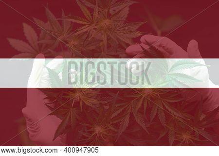Leaf Of Cannabis Marijuana On The Flag Of Latvia. Cannabis Legalization In The Latvia. Weed Decrimin