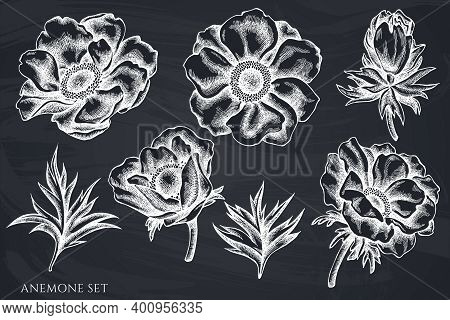 Vector Set Of Hand Drawn Chalk Anemone Stock Illustration