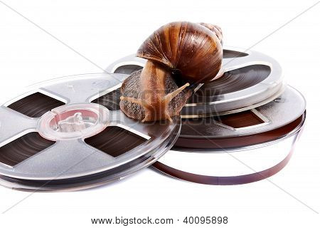 The Snail Creeps On A Recorder Tape