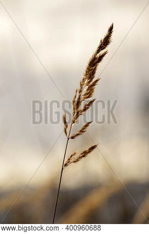 Natural Shoot On The Empty Field In Beskydy.