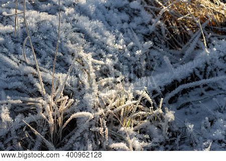 Grass Covered With Crystalline Frost During Winter Frosts. Winter Background