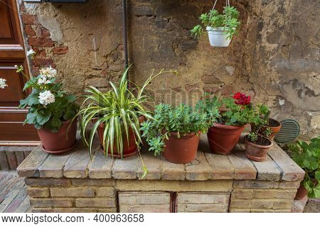 Potted Plants Grow In Terra Cotta Containers Outside In The Town Of  Certaldo, In The Heart Of Tusca