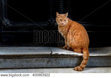 Cute Adult Red Tabby Cat Sitting Under The Black Door