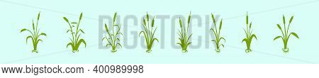 Set Of Cattail Cartoon Icon Design Template With Various Models. Modern Vector Illustration Isolated