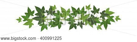 Green Ivy. Wall Climbing Plant Decoration, Design Element, Organic Botanical Border, Summer Natural