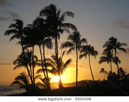 Hawaiin Sunset Silhouette With Palm Trees 1