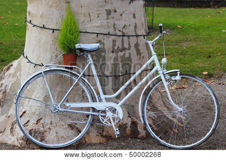 White Bicycle Leaned On A Tree