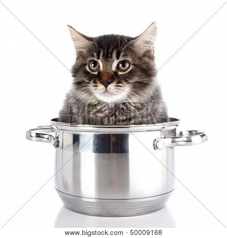 Fluffy Cat With Brown Eyes In A Pan.