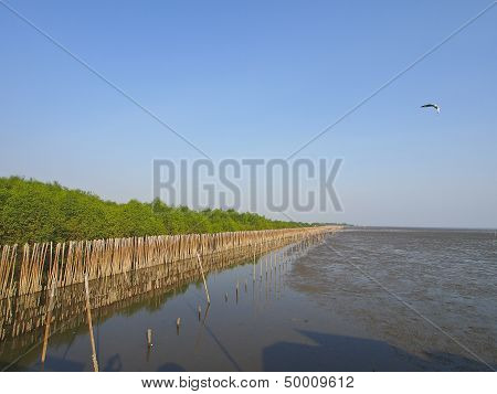 Mangrove Seaside