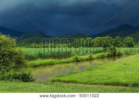 Sugar cane field under dramatic stormy weather in rainy season, Thailand