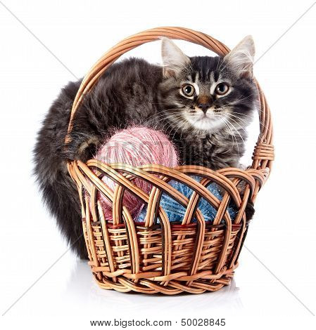 poster of Fluffy cat in a wattled basket with woolen balls. Striped not purebred kitten. Kitten on a white background. Small predator. Small cat.