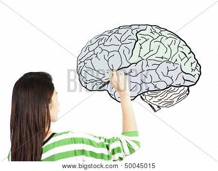 Woman Drawing Human Brain Diagram