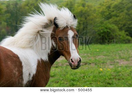 Pony 005