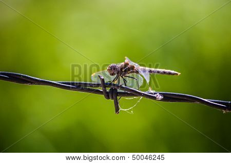 Dragonfly Happiness