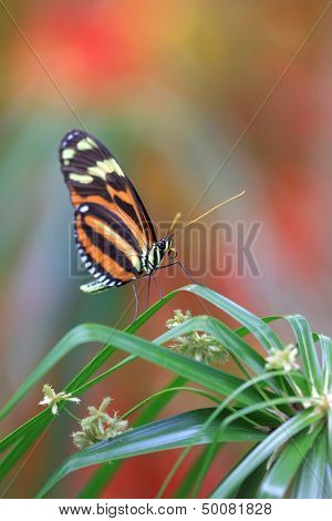 Butterfly on the grass blade