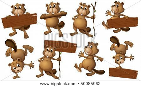 Illustration of a group of playful beavers with empty signboards on a white background