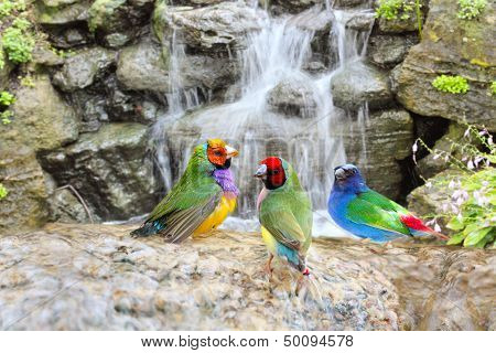 Exotic Birds Enjoying the Water