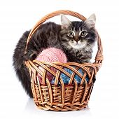 Fluffy cat in a wattled basket with woolen balls. Striped not purebred kitten. Kitten on a white background. Small predator. Small cat. poster