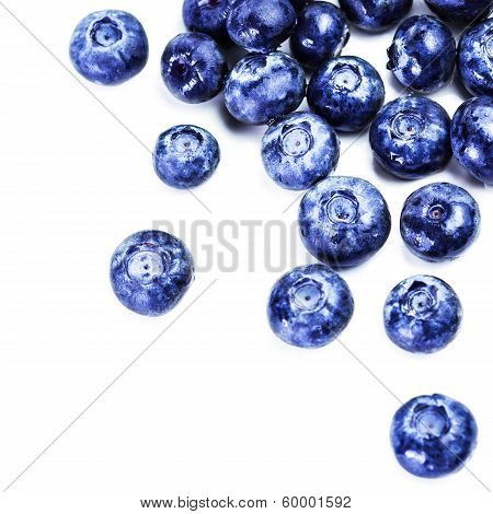 Blueberries Isolated On White Background Close Up. Group Of Huge Blue Berries Macro.