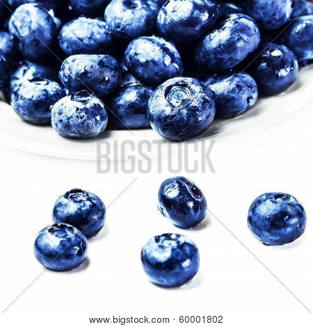 Fresh Blueberries  Isolated On White Background Macro. Blueberry Antioxidant Superfood On White Plat