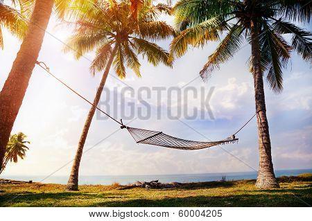 Hammock On Palm Trees