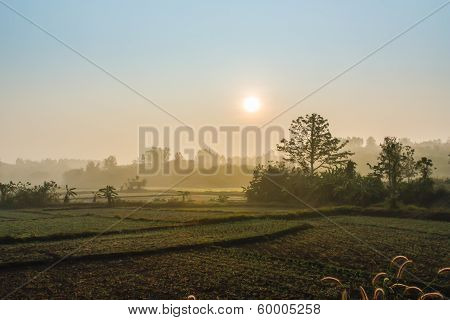 Field Landscape With Morning Sunrise.