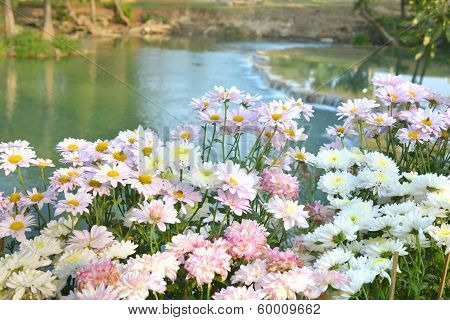 Waterfall With Pink Flower