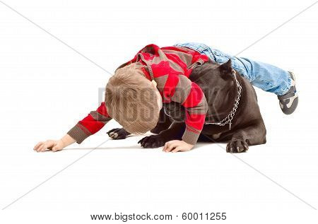 Boy playing with the dog