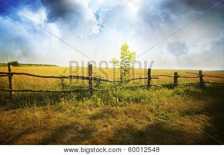 sunset on field at summer