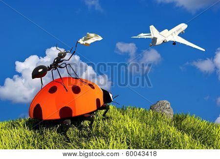 Insects on the grass plane escorts. poster