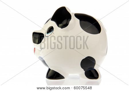 Pig with black and white cow spots left side look isolated in white background poster