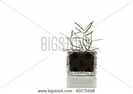Crystal glass container with plant