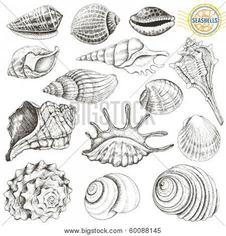 Collection of vector seashells hand-drawn.
